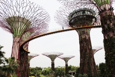 Gardens-by-the-bay_Singapore_supertrees